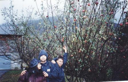 My friends and myself plucking apples in the Alps