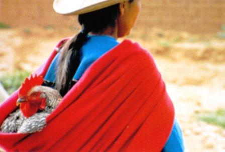 Lady carrying a healthy rooster