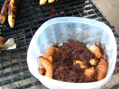 Delicacy of the Amazon