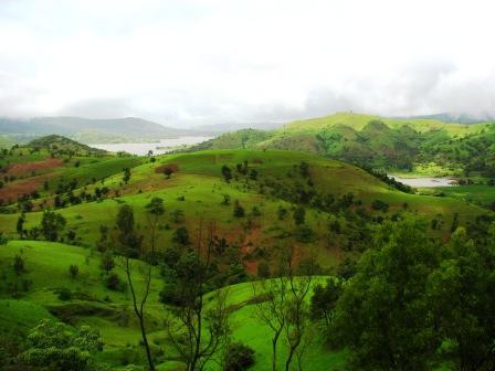 The lush greenery