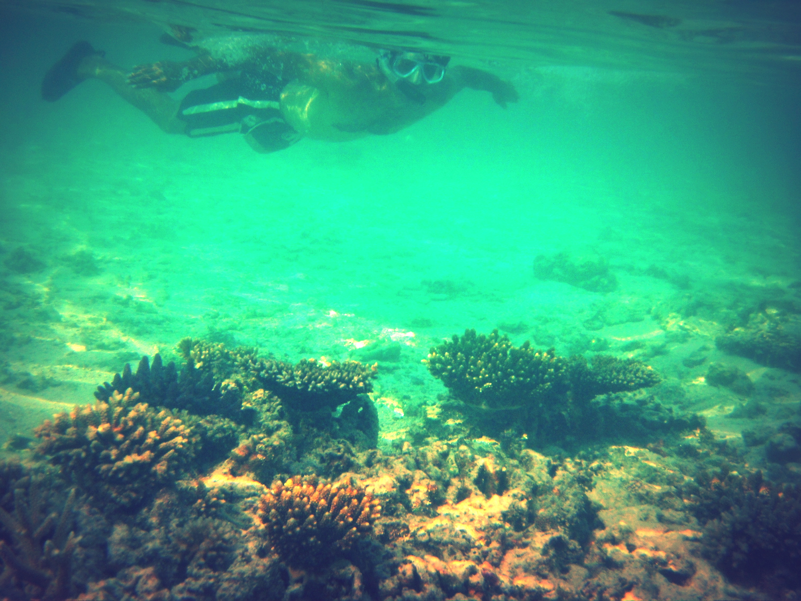Snorkeling in the shallow seas